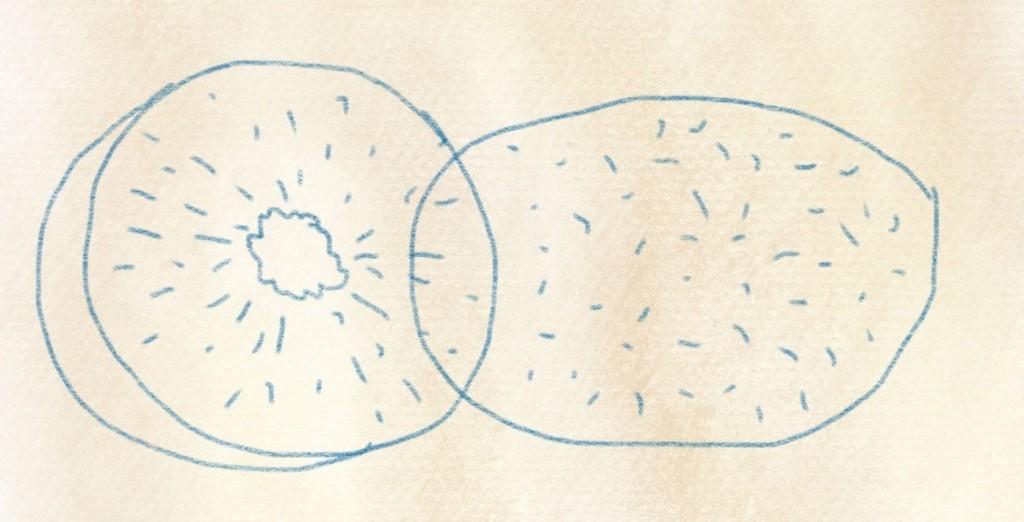illustration kiwi zeichnen – 05