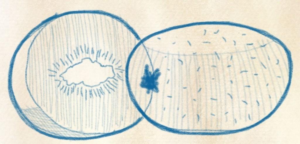 illustration kiwi zeichnen – 18