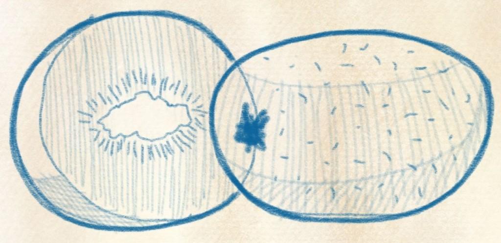 illustration kiwi zeichnen – 19