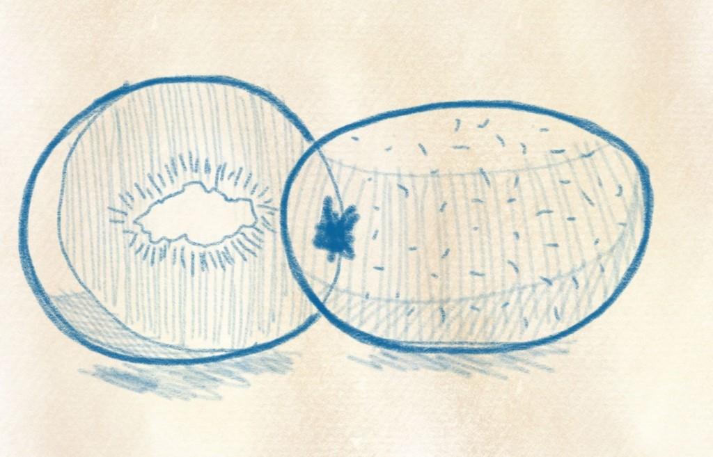 illustration kiwi zeichnen – 20