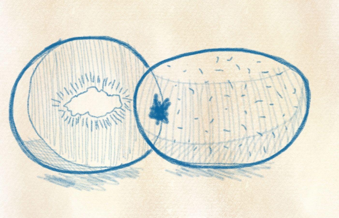 dinge zeichnen wie zeichnet man eine kiwi. Black Bedroom Furniture Sets. Home Design Ideas