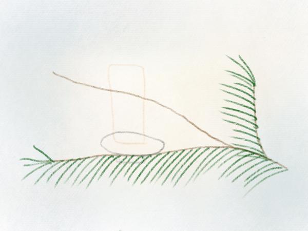 Nadelzweig zeichnen Tannenzweig – 07