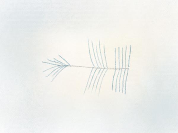 Nadelzweig zeichnen Tannenzweig – 15