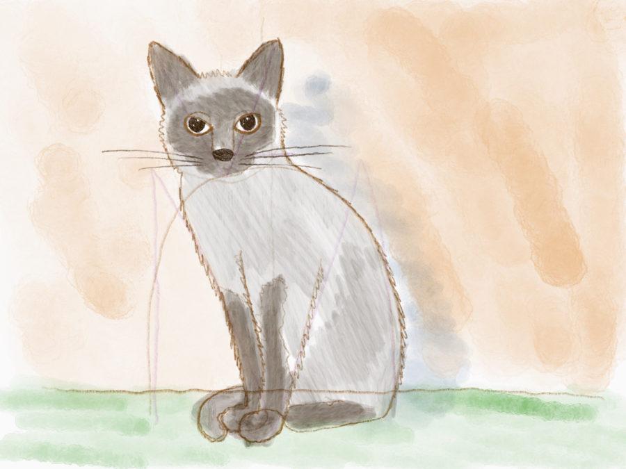 Katze zeichnen - Janice.tv